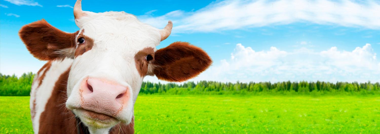 banner-paginas-vaca-vegan