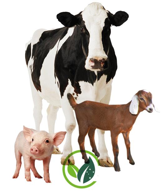 montagem-vegan