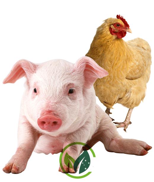 montagem-vegan3