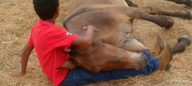 Chorando Muito, Menino Tenta Consolar Burrinho Abandonado Após Acidente E Salva A Vida Dele.