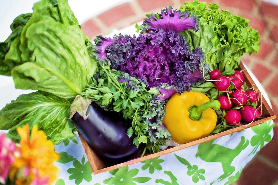 Estudo de Harvard confirma: proteínas vegetais fazem você viver mais!
