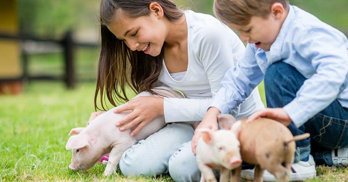 5 Coisas Para Responder Quando Te Dizem Para Salvar Crianças Ao Invés De Animais