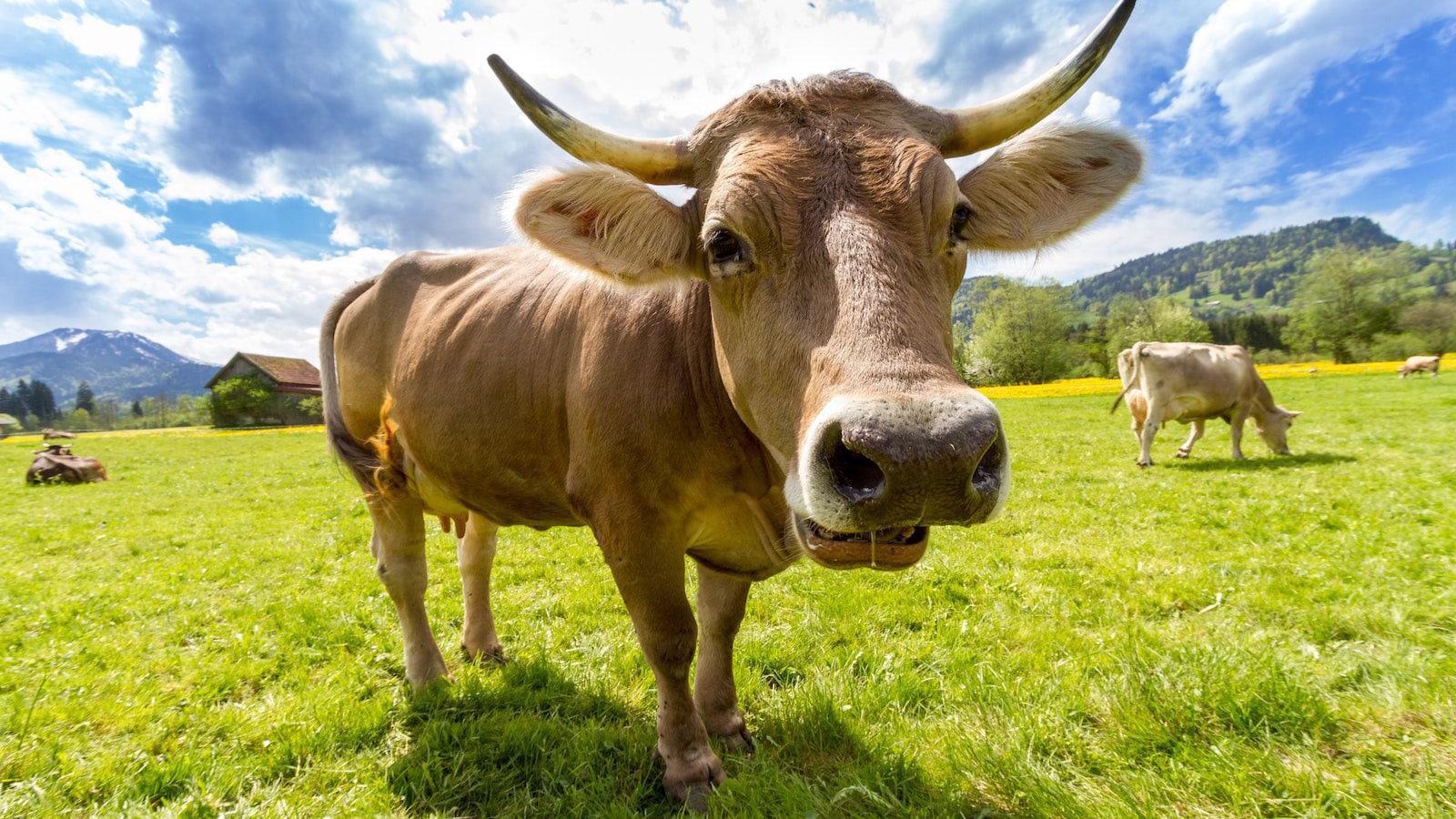 O Programa Ambiental Da ONU Acabou De Declarar A Carne Como O Maior Problema Do Mundo! E O Tratamento Desumano Dos Animais.