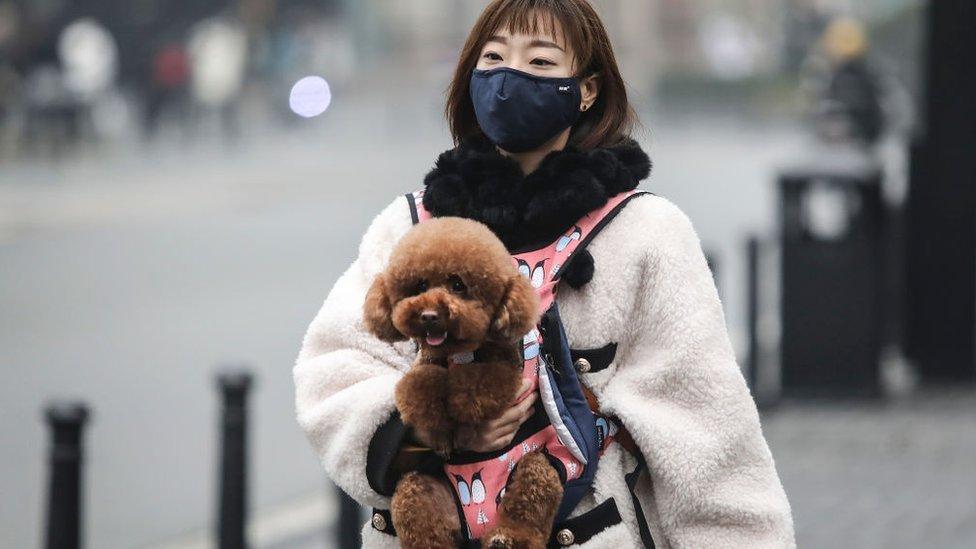 Animais Não-humanos E O Coronavírus